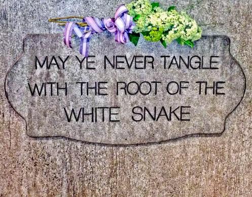 WHITE SNAKEROOT